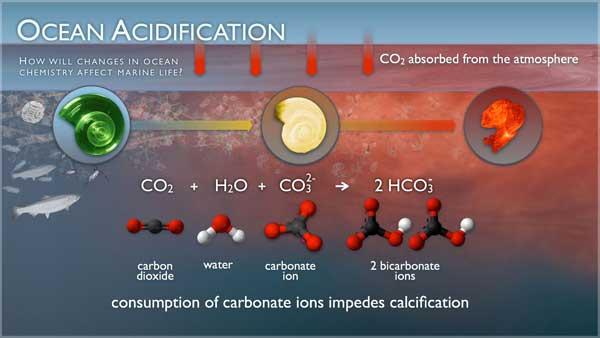 gráfico de la acidificación de los océanos