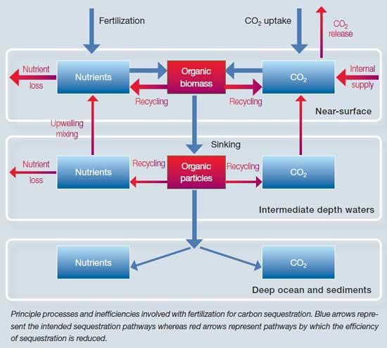 procesos e ineficiencia de la fertilización en el secuestro de carbono