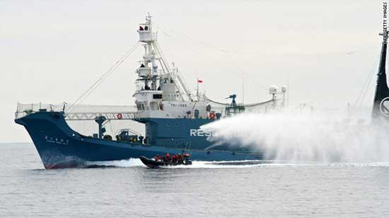 Sea Shepherd durante el acoso a la flota ballenera japonesa
