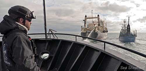 Sea Shepherd durante el acoso a la flota ballenera japonesa, febrero 2011