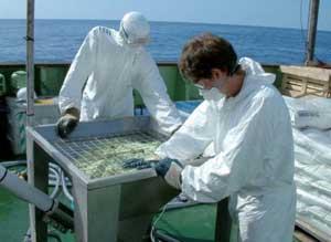 sulfato férrico para la fertilización del océano