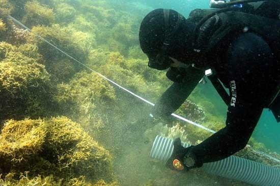 Super Sukcer absorve las algas
