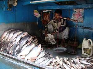 tienda de pescado en la India