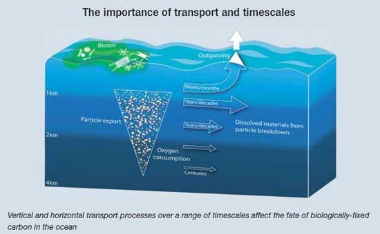 transporte de carbono en el océano