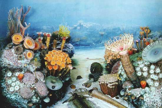 vida marina en el Devónico