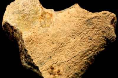 fósil de Ophthalmosaurus