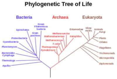 árbol filogenético de la vida