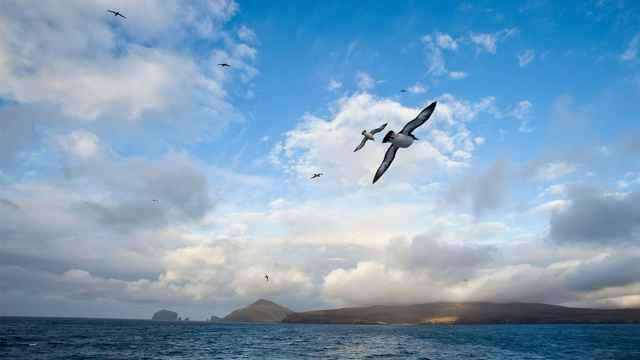aves marinas pueden ayudar al pronóstico del tiempo