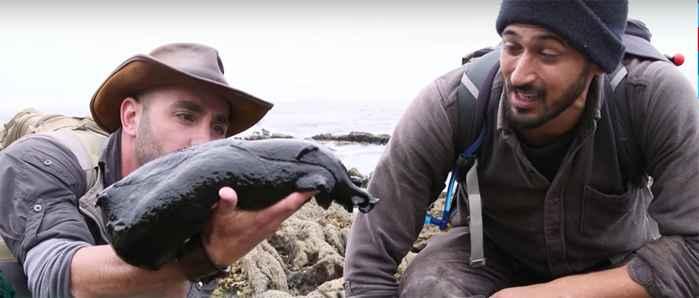 babosa de mar gigante negra