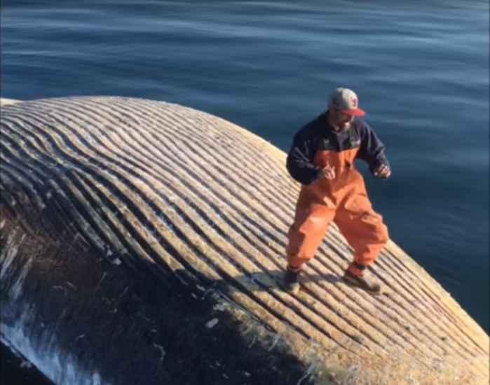 baile sobre una ballena muerta
