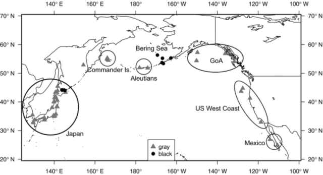 distribución de la ballena Karasu