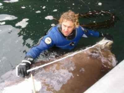 ballena karasu varada es reconocida por Reid Brewer