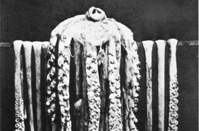 primera fotografía de una calamar gigante - 1874