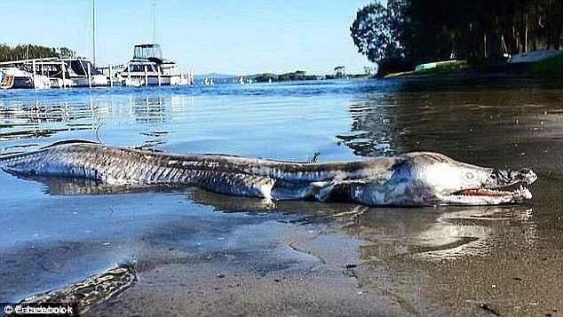 animal mitad cocodrilo mitad delfín aparecido en Australia