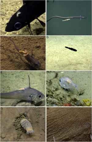ectoparasitismo marino