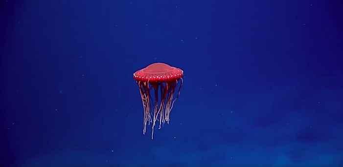 medusa OVNI