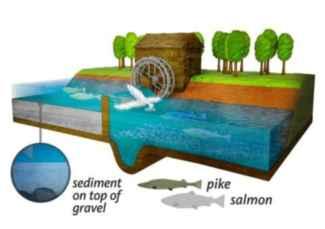 molino de agua obstruye el viaje del salmón