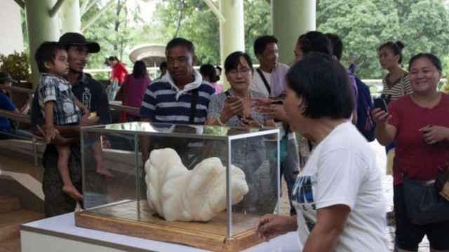 perla gigante en el ayuntamiento de Puerto Princesa, Filipinas