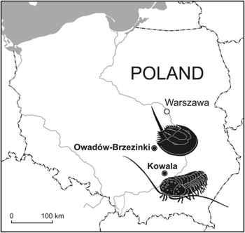 trilobites en Polonia
