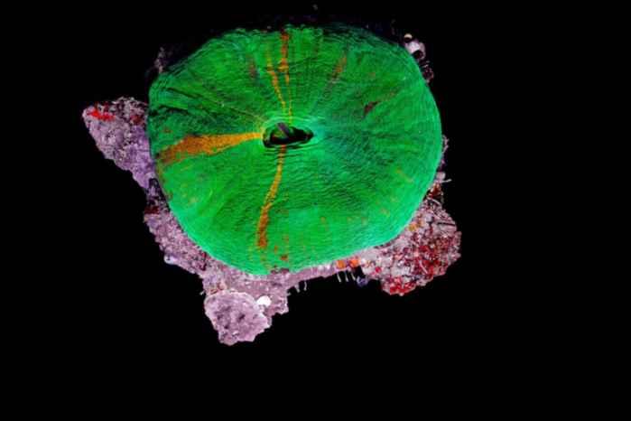 corales en timelapse