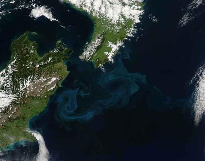 floración de plancton en Nueva Zelanda