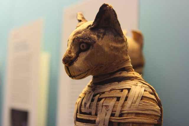 gato egipcio momificado