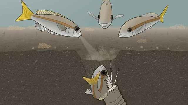 gusano bobbit capturando una presa