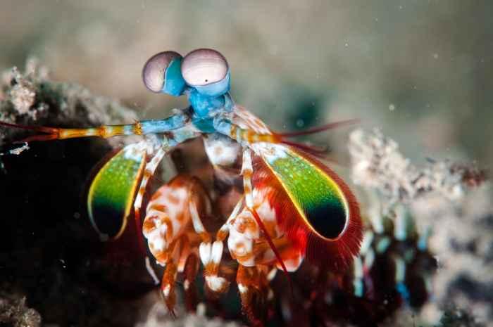 ojos del camarón mantis