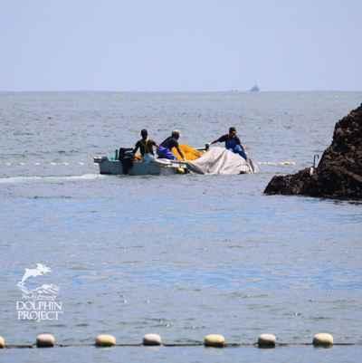 primeros delfines cazados en Taiji