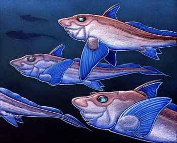 Hydrolagus trolli, dibujo de Ray Troll