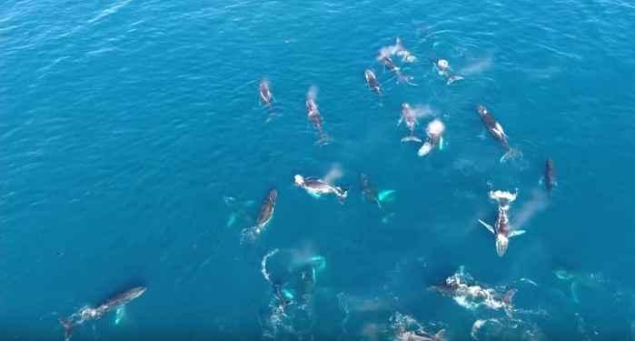 manada de ballenas jorobadas cerca de Ciudad del Cabo