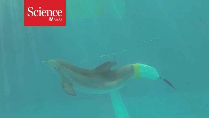 delfín nada con una prótesis