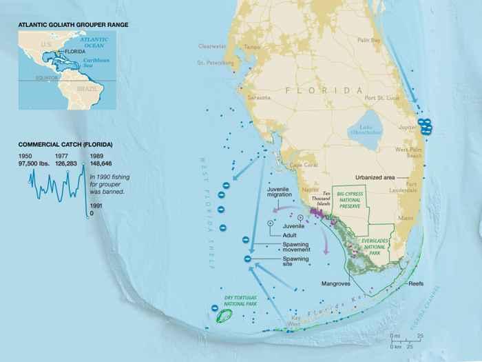 distribución del mero goliat en Florida