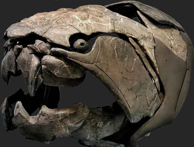 cráneo de Dunkleosteus