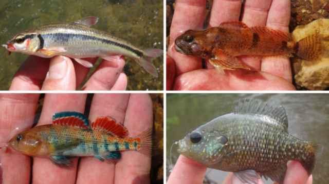 micro pesca