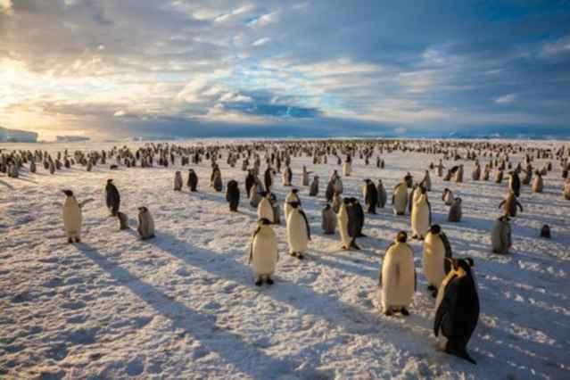pingüinos emperador sobre el hielo de la Antártida