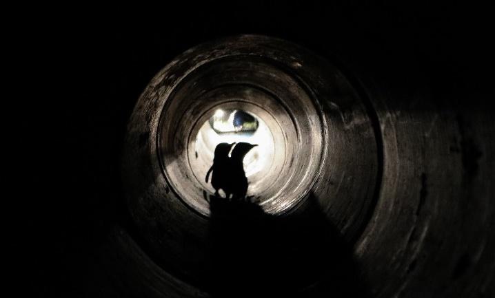 túnel para pinguinos en Nueva Zelanda