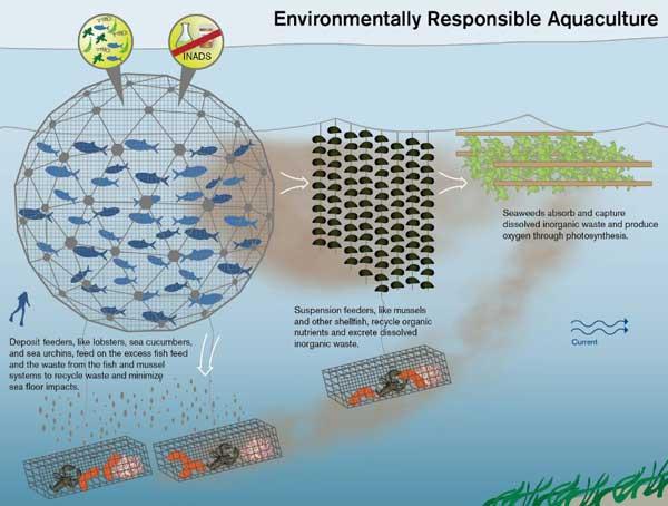 desarrollo de una acuicultura responsable