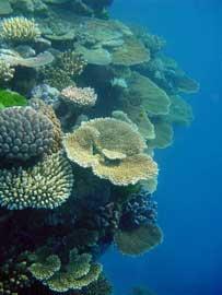 arrecifes de coral saludables