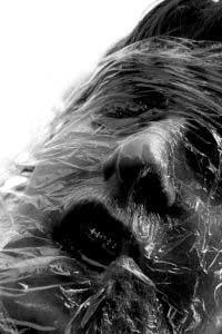 cara de un cadaver en la morgue