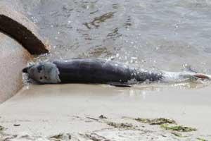delfín bebé muerto en la costa del Golfo