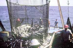 descargando una red repleta de atunes