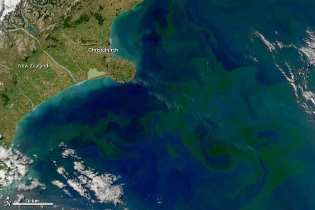 fitoplancton costa de Nueva Zelanda