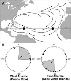 giro subtropical Nort-atlántico