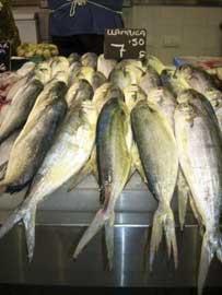 Llampugas enuna pescadería de Mallorca