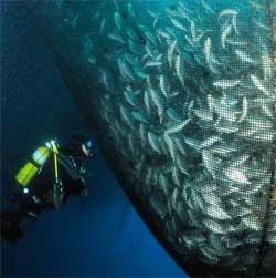 red con peces en acuicultura marina
