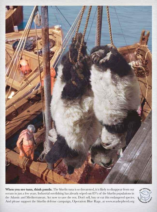 Sea Shepherd, Cuando veas un atún, piensa en un panda