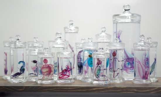tarros con esqueletos de peces transparentes de Iori Tomita