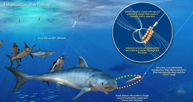 anzuelo para palangre proteje al tiburón