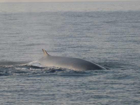 avistamiento de ballena en aguas de Castellón